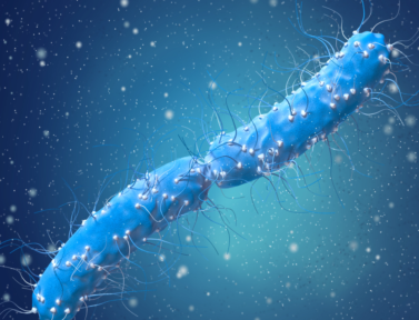Устойчивость планктонной и биопленочной форм кишечной палочки E. coli к растворимым нитрофуранам