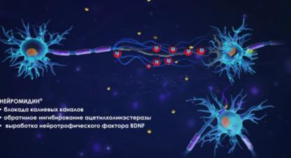 Механизм действия Нейромидин